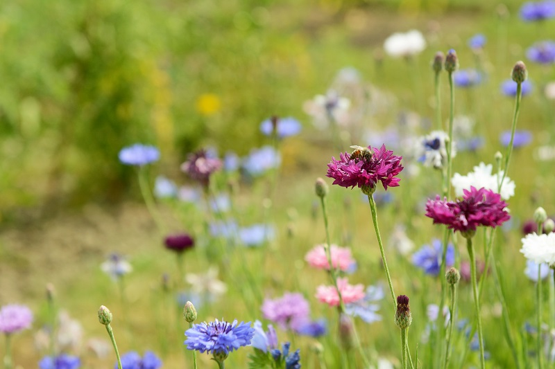 Ein blühendes Umfeld macht das Insektenhotel für seine Bewohner noch attraktiver. Bild: Getty Images