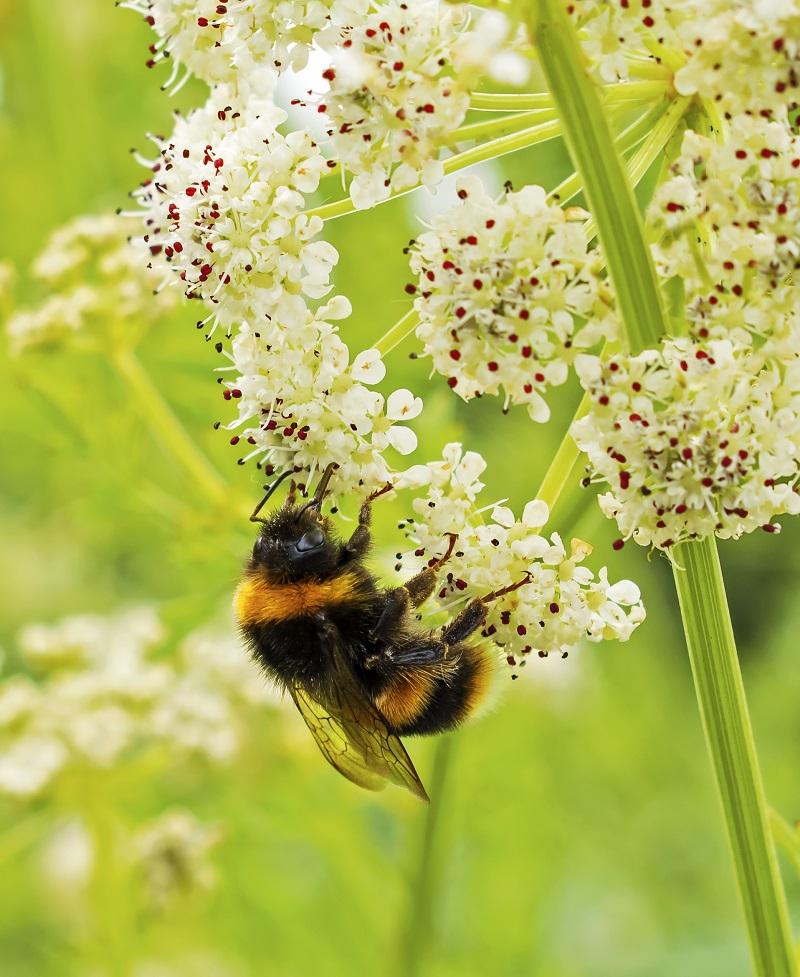 Wo es grünt und blüht fühlen sich Insekten wohl. Lasst der Natur deshalb im Garten ihren Lauf. Bild: Getty Images